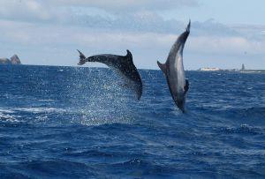 626748_golfinhos_-_dolphins